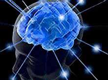 Человеческий мозг перестанет развиваться?