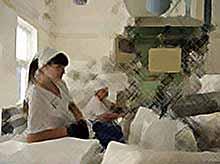 Сахарные заводы Кубани не справляются с урожаем свеклы