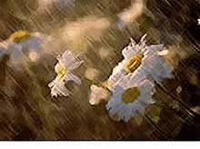 Дожди и грозы прогнозируются на Кубани  19 мая