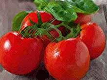 Турецкие помидоры не будут конкурентами кубанским овощам