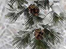 Первый снег на Кубани прогнозируют в середине января