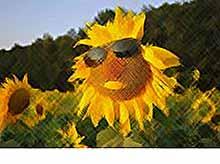 Август на  Кубани станет самым жарким месяцем лета