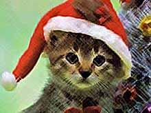 В Краснодаре прошел костюмированный бал кошек