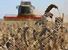 Аграриям на Кубани выделят 6 млрд рублей