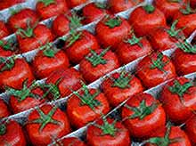 Когда в Россию вернутся турецкие помидоры?