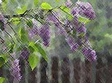 Новая неделя на Кубани  начнется с дождей