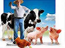 На Кубани аграрии начали получать госсубсидии.