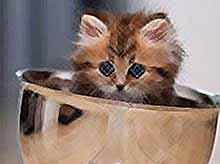 Кошки помогут снизить давление и продлить жизнь?
