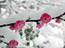 В Тимашевске ожидаются заморозки