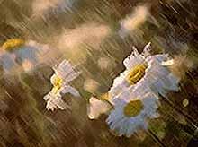 В Краснодарском крае пройдут дожди с грозой, ветром и градом