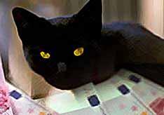 Римский кот получил в наследство €10 миллионов.