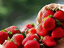 В Краснодарском крае урожай клубники увеличился на 27%