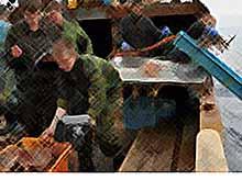 Жители Кубани причинили ущерб водным биологическим ресурсам Азово-черноморского рыбохозяйственного бассейна на 600 тысяч рублей