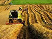 Агросектор вырос из-за санкций на 50%