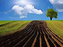 В Краснодарском крае  продлили льготный период выкупа сельхозземель