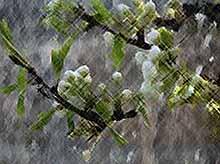 На Кубани прогнозируются дожди с грозами