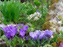 Как правильно утилизировать сорные растения и сделать непривлекательную компостную кучу украшением сада