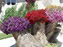 Восхитительные цветники из старых пней