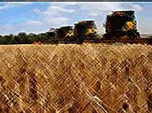 Санкции превратили Россию в агрокультурную сверхдержаву