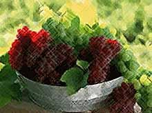 В Краснодарском крае  собрали 133 тысячи тонн винограда