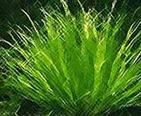 Растения способны издавать звуки и реагировать на них