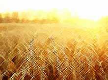 Россия добилась невиданных ранее успехов в области сельского хозяйства