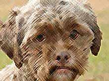 В Америке нашли собаку с человеческим лицом