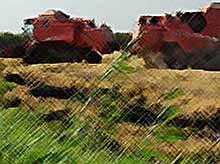 На Кубани собрали  риса почти 940 тыс. тонн