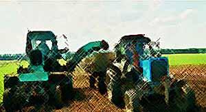 Фермерам выдадут субсидии на оформление земель в собственность