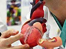 На Кубани вырастят искусственное человеческое сердце