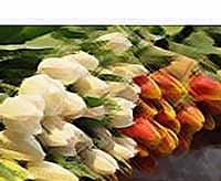 Как правильно выбрать цветы на 8 марта?