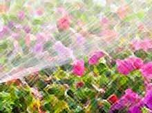 Как спасти растения от жары?