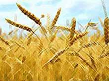 Россия сняла запрет  на экспорт зерна.