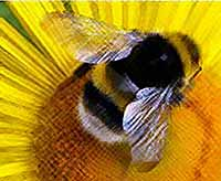 Укус пчелы превратил мужчину в женщину  (видео)
