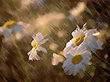 Начало недели на Кубани будет дождливым