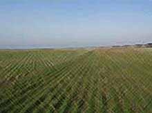 Возможные заморозки грозят будущему урожаю Кубани