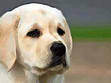 Собаки способны читать мысли человека
