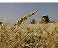 В 2012 году урожай зерна в России должен составить не менее 90 млн тонн