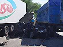 Новые подробности страшного ДТП в Тимашевском районе (видео)
