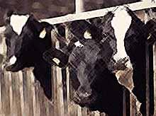 «Агрокомплекс имени Ткачева» построит в Ростовской области восемь ферм и завод по переработке молока за 45 млрд рублей