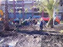 Добровольцы  из Тимашевска подключились к благоустройству в Сочи