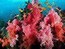 Коралловые рифы помогут лечить переломы.