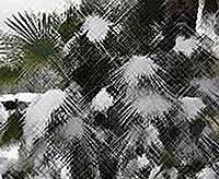 Зима лютует: в Сочи-небывалый снегопад,а Черное море замерзло (видео)
