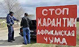 Губернатор Кубани проведет краевой Совбез, посвященный африканской чуме свиней.