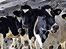Тимашевские животноводы добились увеличения продуктивности производства молока
