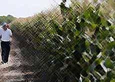 На Кубани построят завод по производству семян сои