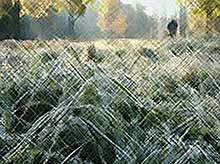 В Краснодарском крае ожидаются ночные заморозки