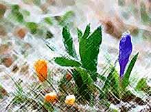 В Краснодарском крае прогнозируются заморозки