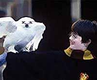 Доказано: фильмы  про магию и волшебников развивают фантазию у детей (видео)