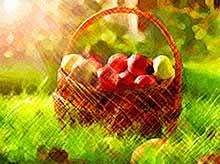 Яблоки помогут в снижении веса